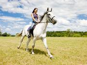 Прокат лошадей на ипподроме во второй (2 -й) конюшне